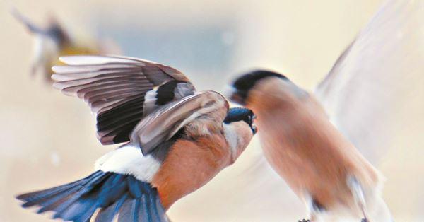 Все птицы в гости к нам: что такое бердвотчинг и зачем он нужен Казахстану