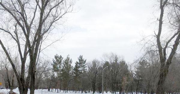 Много шума… и ничего: карагандинцев возмутила безжалостная вырубка деревьев в центре города